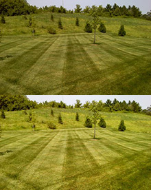 Lawn Striping Services